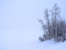 蓝色冬天 免版税库存照片