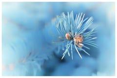 蓝色冬天 库存图片