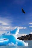 蓝色冰山 库存照片
