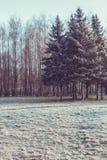 蓝色冷淡的早晨在公园 免版税库存图片