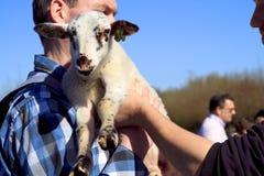 蓝色出生的暂挂的羊羔人新的衬衣 免版税库存图片
