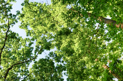 蓝色分支天空结构树 库存图片