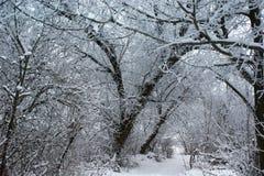 蓝色分行休息日霜谎言天空雪结构树冬天 安静的森林积雪的树和一条小道路 免版税库存照片