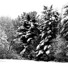 蓝色分行休息日霜谎言天空雪结构树冬天 免版税库存照片