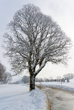蓝色分行休息日霜谎言天空雪结构树冬天 库存图片