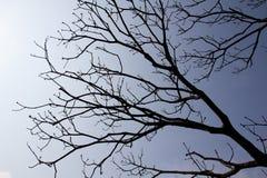 蓝色分行天空结构树 库存照片