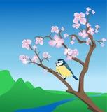 蓝色分行开花的山雀 图库摄影