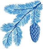 蓝色分行毛皮结构树 免版税库存照片