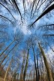 蓝色加冠深天空春天结构树 图库摄影