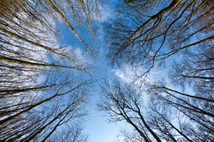 蓝色加冠深天空春天结构树 库存图片