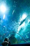 蓝色动物园 库存图片