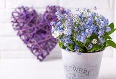 蓝色勿忘草或勿忘我草在灰色桶和12月开花 库存图片
