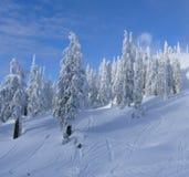 蓝色原始天空雪结构树 免版税图库摄影