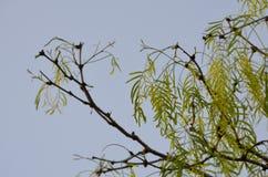 蓝色叶子天空 免版税库存照片
