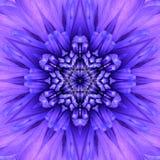 蓝色同心花中心。坛场万花筒设计 库存图片