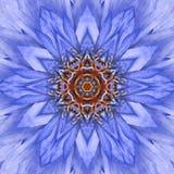 蓝色同心花中心坛场万花筒设计 免版税库存照片