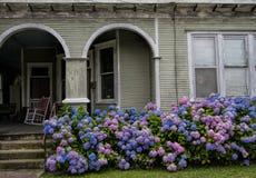 蓝色和桃红色八仙花属开花-女王Hortense 库存照片