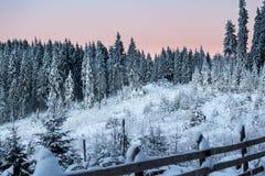 蓝色和桃红色天空在冬天 库存图片