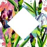 蓝色和桃红色虹膜 花卉植物的花 框架边界装饰品正方形 免版税库存图片