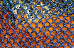 蓝色和橙色网 库存照片