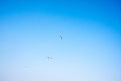 蓝色和白色和鸟 免版税库存照片