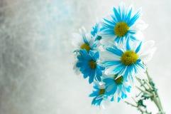 蓝色和白色翠菊在一个玻璃花瓶开花 免版税库存图片