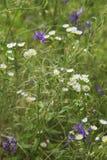 蓝色和白花 免版税库存照片