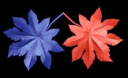 蓝色和红色叶子 库存图片