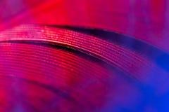 蓝色和红色羽毛作为抽象背景 库存照片
