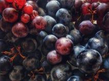 蓝色和红葡萄酒葡萄 库存照片