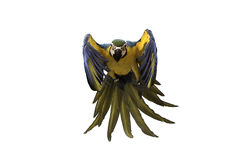 蓝色和金在白色背景,裁减路线的金刚鹦鹉飞行 库存图片