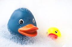 蓝色和黄色橡胶鸭子戏弄与在浴的青苔 免版税库存图片