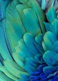 蓝色和绿色羽毛 免版税库存图片
