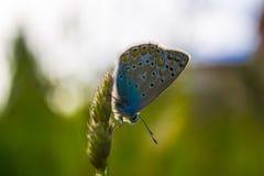 蓝色和绿色蝴蝶 库存照片