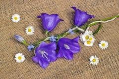 蓝色响铃和雏菊 免版税库存图片
