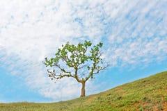 蓝色唯一天空结构树 免版税库存照片