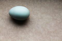 蓝色唯一鸡蛋 免版税库存照片