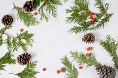 蓝色圣诞节框架魔术 杉树分支和在白色背景的花楸浆果 顶视图构成 库存照片