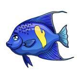 蓝色在白色的鱼阿拉伯天使 免版税库存图片