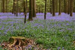 蓝色地毯 免版税库存图片