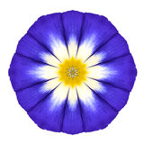 蓝色坛场花装饰品 被隔绝的万花筒样式 免版税库存照片