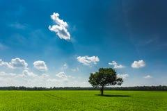 蓝色域天空结构树 免版税图库摄影