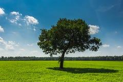 蓝色域天空结构树 库存图片
