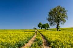 蓝色域强奸天空结构树 免版税库存图片