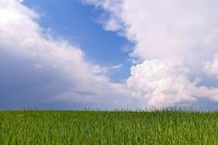 蓝色域绿色天空麦子 图库摄影