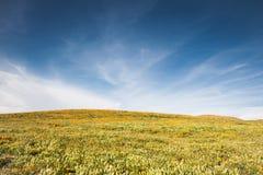 蓝色域花天空 库存照片
