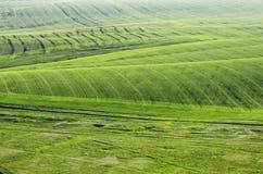 蓝色域草绿色天空春天 在视图之上 免版税库存图片