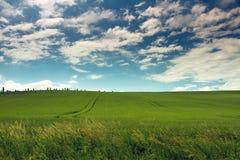 蓝色域草绿色天空春天 免版税库存图片