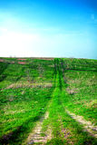 蓝色域草绿色天空春天 免版税库存照片