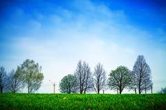 蓝色域草绿色天空春天 库存照片